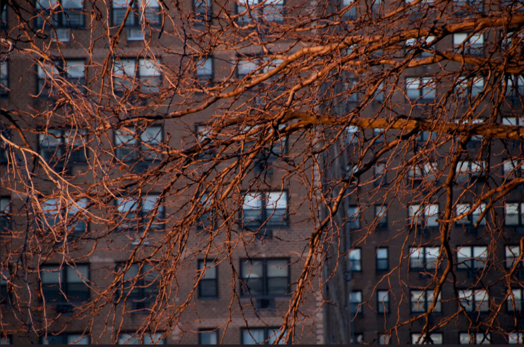 tree brick apartments